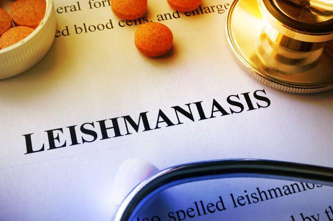 Лейшманиоз: причины, симптомы, лечение
